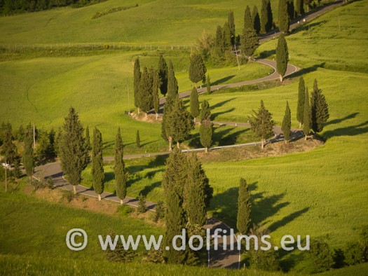 stock photo cypresses at sunset