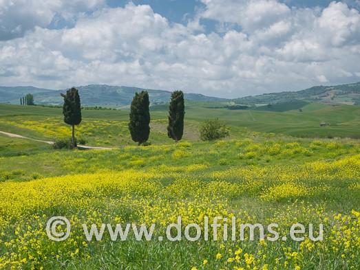 stock foto cypress trees Tuscany