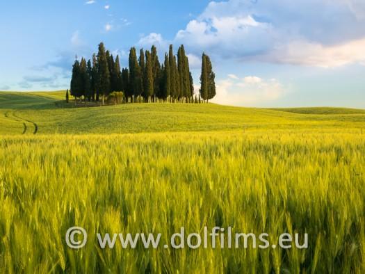 stock photo cyprees trees Tuscany