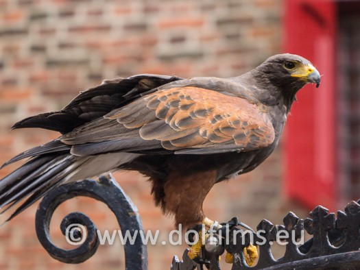 stockfoto roofvogel