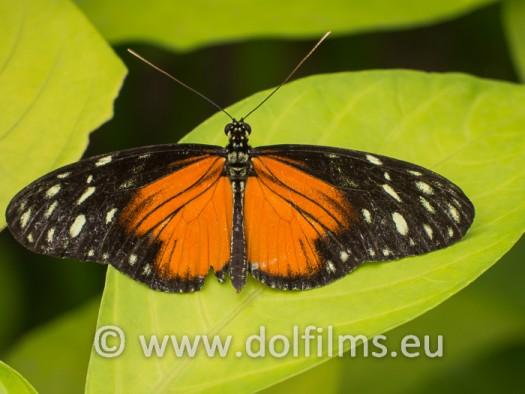 stockfoto vlinder oranje