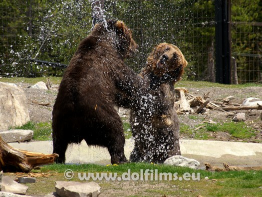 stock photo two black bears