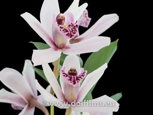 stock photo orchid